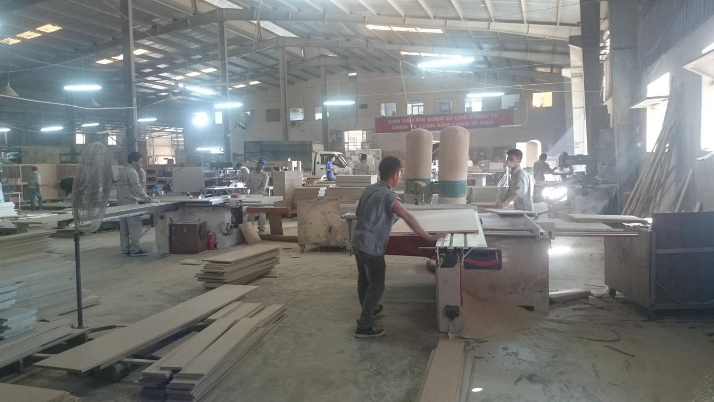 Những ván gỗ nguyên sơ khi mới đầu vào nhà máy
