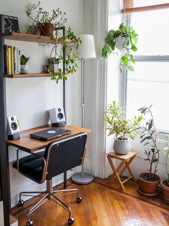 Sử dụng cây xanh trong trang trí phòng làm việc.