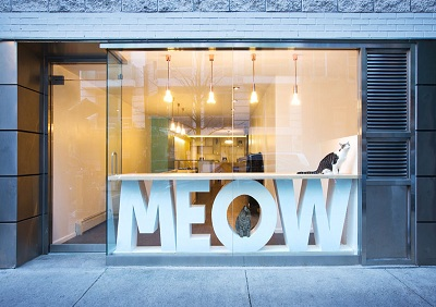 thiet-ke-quan-cafe-Meow