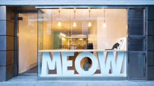 Thiết kế quán cafe đơn giản Meow của chị Neo Hà Đông