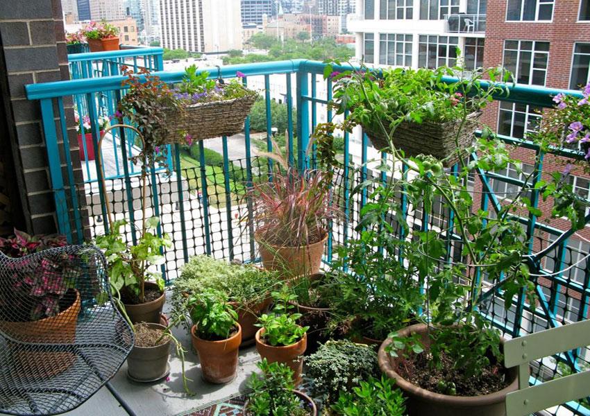 Tận dụng ban công căn hộ chung cư để trồng thật nhiều cây xanh
