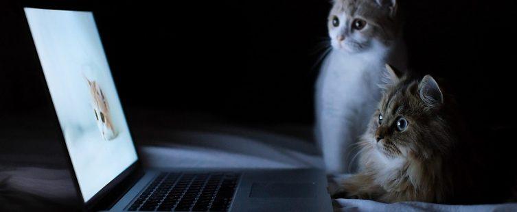 tự chế bàn laptop