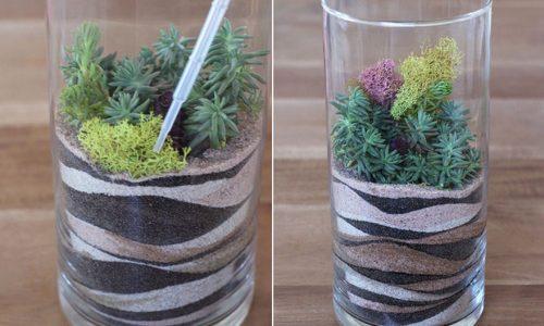 Trồng cây trong ống thủy tinh - nhìn thì khó nhưng làm thì dễ