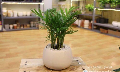 Phong thủy phòng khách nên trồng cây gì thu hút tài lộc? (Phần 2)