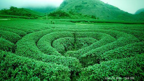 Ghé thăm 3 đồi chè trái tim nổi tiếng tại Mộc Châu - Sơn La