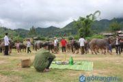 Bạn có biết gì về lễ cúng vía trâu của người Thái ở Sơn La không?