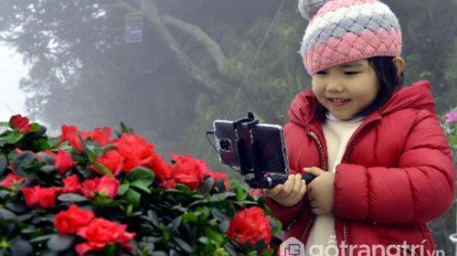 """Đặc sắc """"Lễ hội hoa đỗ quyên"""" được tổ chức tại đỉnh Fansipan"""