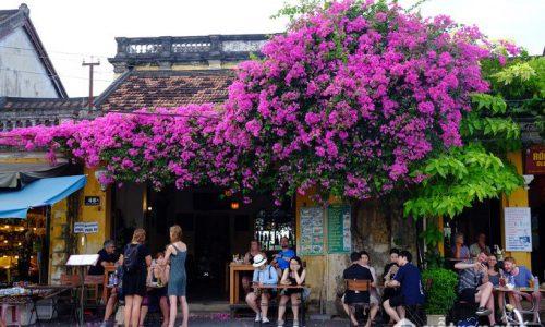 Rủ nhau du lịch Hội An ngắm hoa mùa hè rực rỡ trong ngõ phố cổ