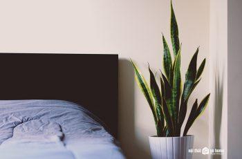 9 loại cây cảnh giải phóng oxi vào ban đêm cho phòng ngủ