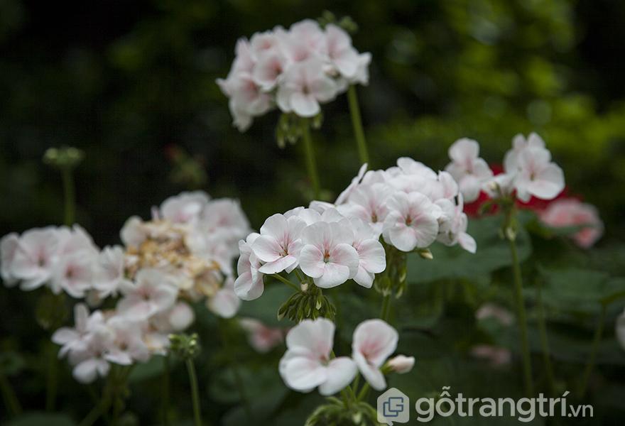 hoa-trang-tri-trong-nha