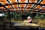 Khám phá hương vị miền Tây qua làng nghề chuối khô Cà Mau truyền thống