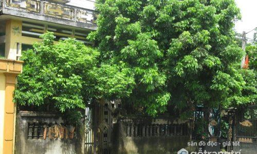 Hậu quả của lỗi phong thủy nhà có cây to trước cửa và cách hóa giải