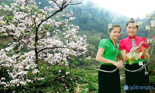 Rực rỡ Lễ hội Hoa Ban truyền thống của người dân tộc Thái ở Tây Bắc