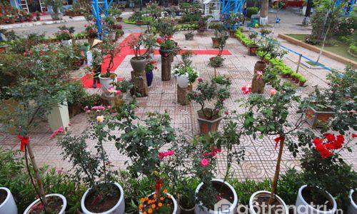 Lễ hội hoa hồng Bulgaria tại Hà Nội hội tụ đủ sắc hoa rực rỡ