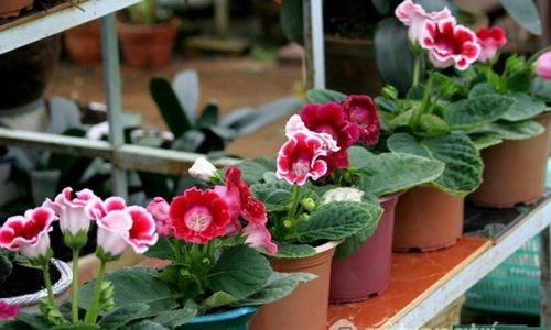 7 loại cây trồng trong nhà thích hợp nhất với mùa đông giá lạnh