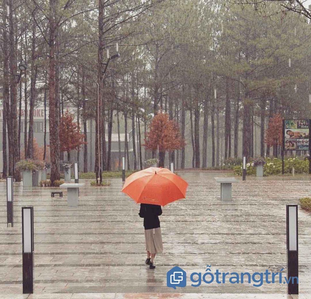 Trải nghiệm thú vị chỉ có tại ở Đà Lạt vào những ngày mưa (ảnh internet)