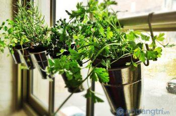 Ý tưởng tạo vườn cây thảo mộc trong nhà – áp dụng ngay! (P1)