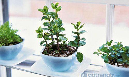 Ý tưởng tạo vườn cây thảo mộc trong nhà – áp dụng ngay! (P2)