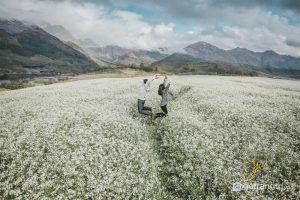 Bản Pa Phách - Địa điểm ngắm hoa cải trắng đẹp nhất khi đến Mộc Châu (Ảnh internet)