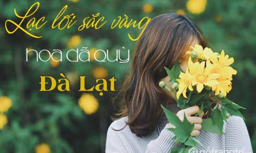 Tháng 11 này có một mùa hoa dã quỳ Đà Lạt đẹp đến ngỡ ngàng