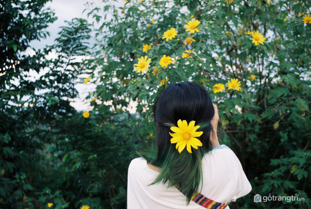 """Các bạn trẻ thỏa sức chụp ảnh """"sống ảo"""" khi đến Đà Lạt vào mùa hoa dã quỳ (ảnh internet)"""