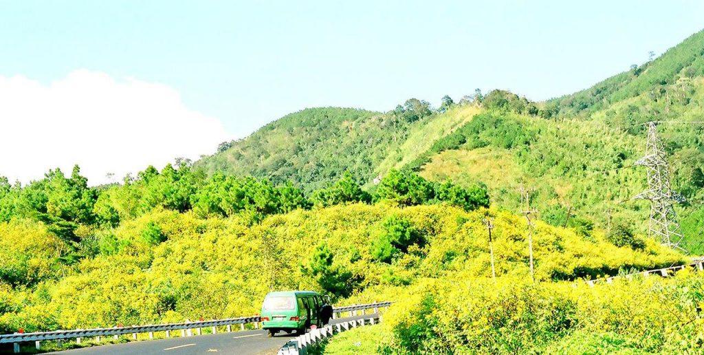 Sắc vàng dã quỳ rực rỡ núi rừng Mộc Châu