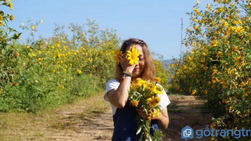 Những điểm chụp hoa dã quỳ đẹp ngất ngây nhất định bạn phải đến