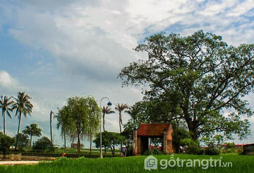 Cổng làng Đường Lâm (ảnh Lê Bích)