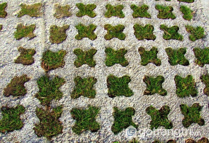 Tấm bê tông thực vật dùng để lát sàn, lề đường, vỉa hè hay lối đi bộ (Ảnh: Internet)