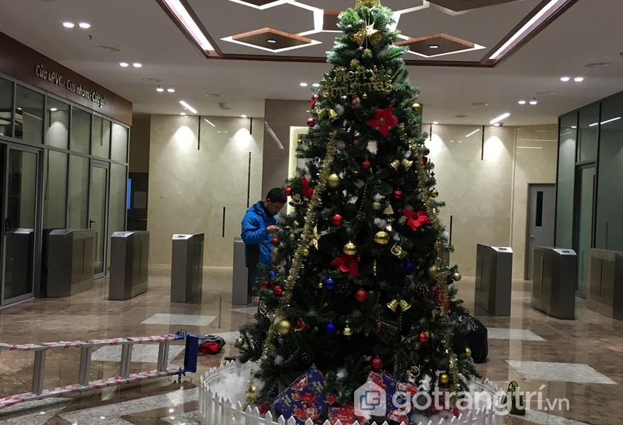 Cây thông - biểu tượng của mùa lễ giáng sinh (Ảnh Internet)