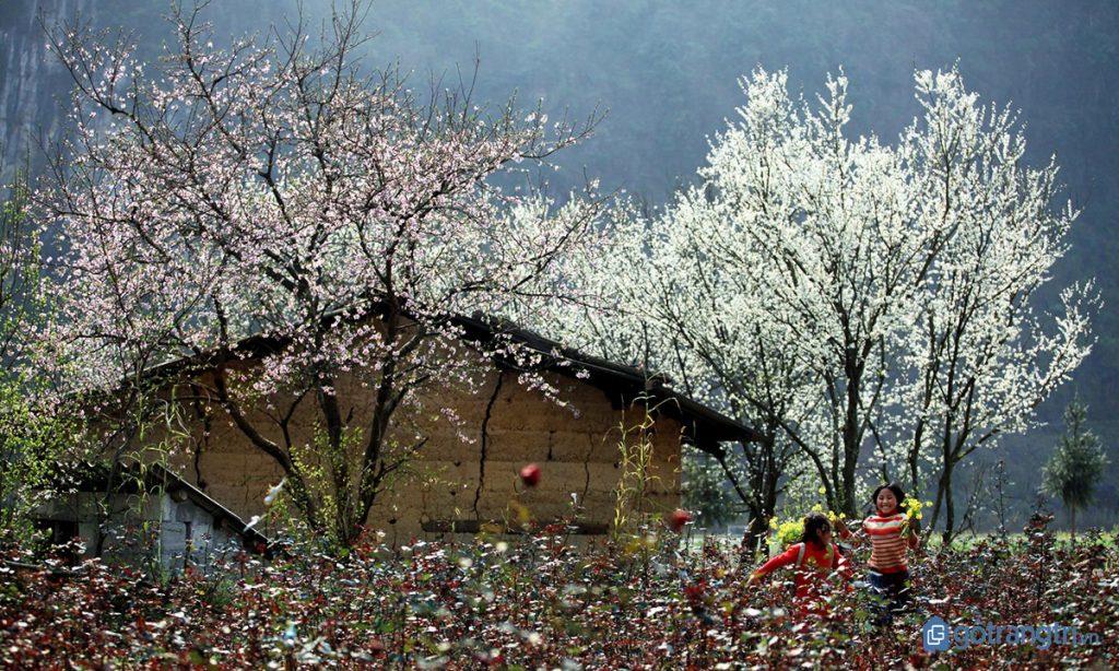 Hoa đào miền Tây Bắc làm đẹp thêm bức tranh ngày Tết của người dân tộc Nùng. (ảnh: internet)