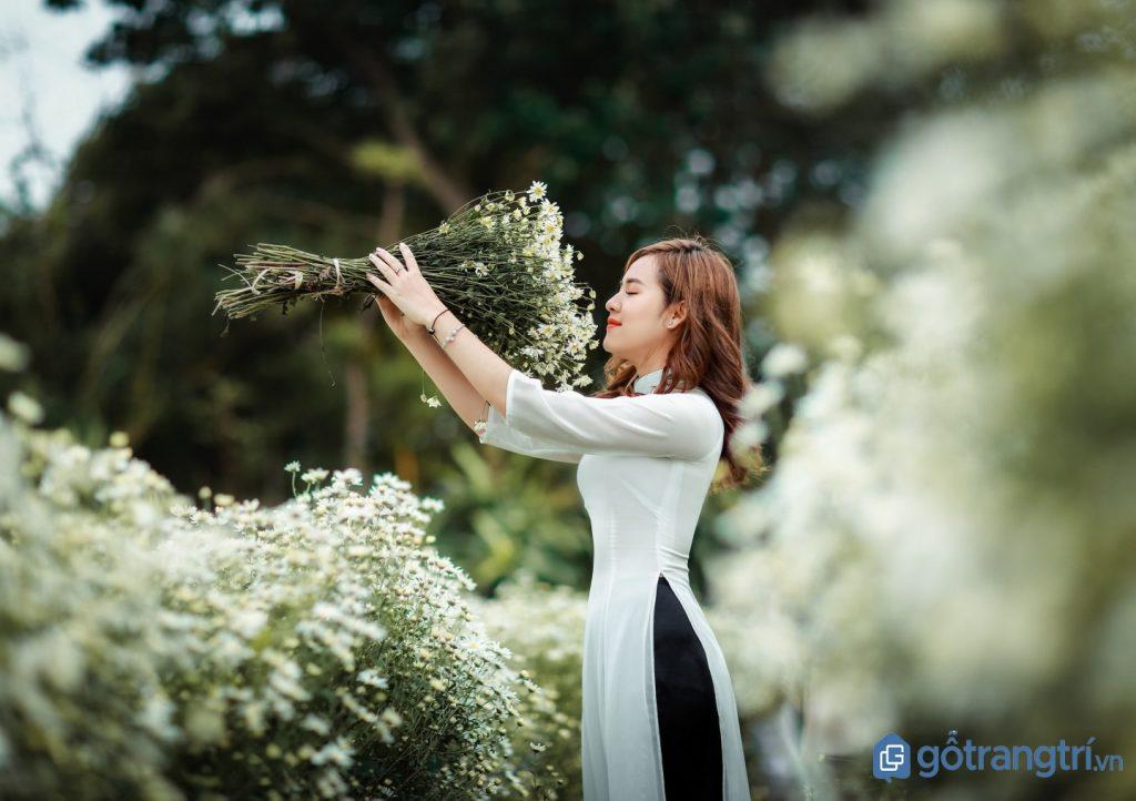 Một thiếu nữ đang tạo dáng chụp ảnh với cúc họa mi đẹp. (ảnh: internet)