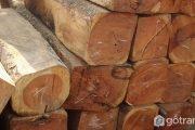 [Tìm hiểu] Gỗ gụ là gì? Ứng dụng dòng gỗ gụ trong sản xuất nội thất 2019