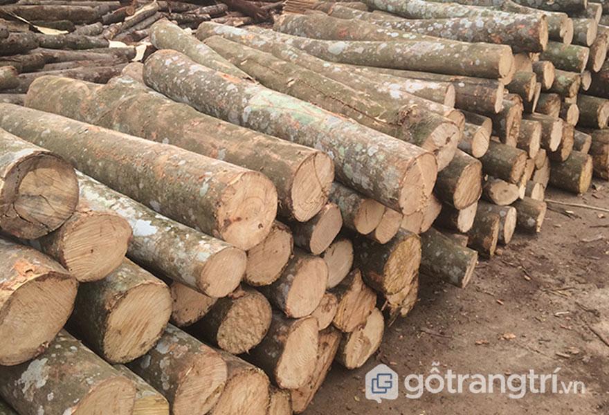 Ưu điểm gỗ keo tự nhiên (Ảnh: Internet)