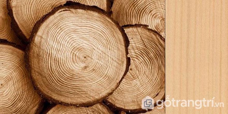 [Hỏi - Đáp]: Gỗ thông là gì? Ưu và nhược điểm của gỗ thông (Ảnh: Internet)