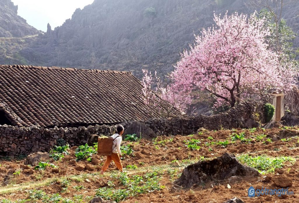 Bản người Nùng ở Lạng Sơn vào mùa xuân. (ảnh: internet)