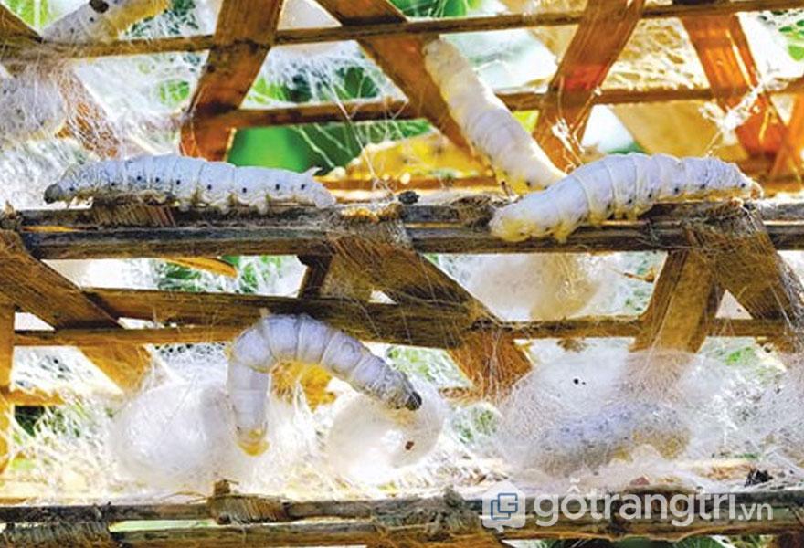 Tơ tằm được nhập từ Bảo Lộc - Lâm Đồng (Ảnh: Internet)