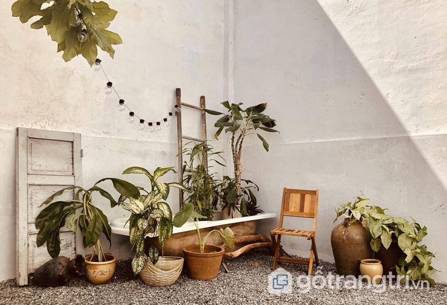 Chậutrang tríluôn là một lựa chọn vững chắc, cũng như những cây trồng trong nhà có thể thêm một chút tươi mát cho không gian (Ảnh: Internet)