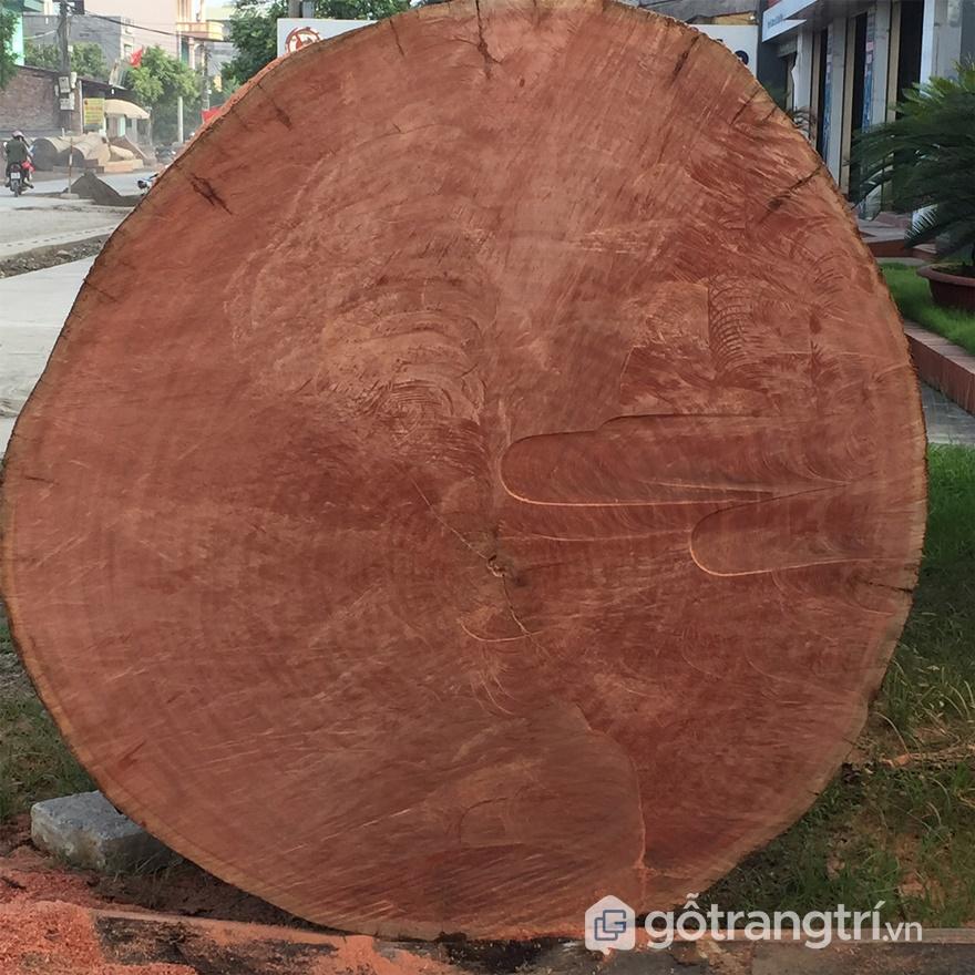 Thân cây gỗ hương - ảnh internet