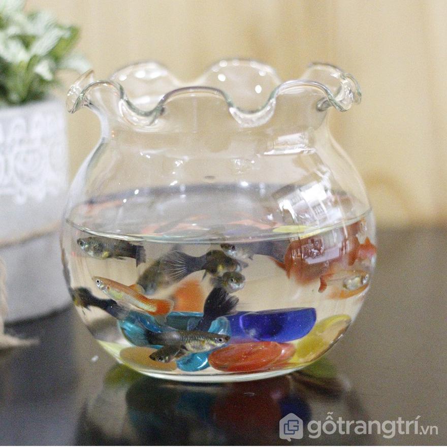 Chậu cá thủy tinh trang trí văn phòng