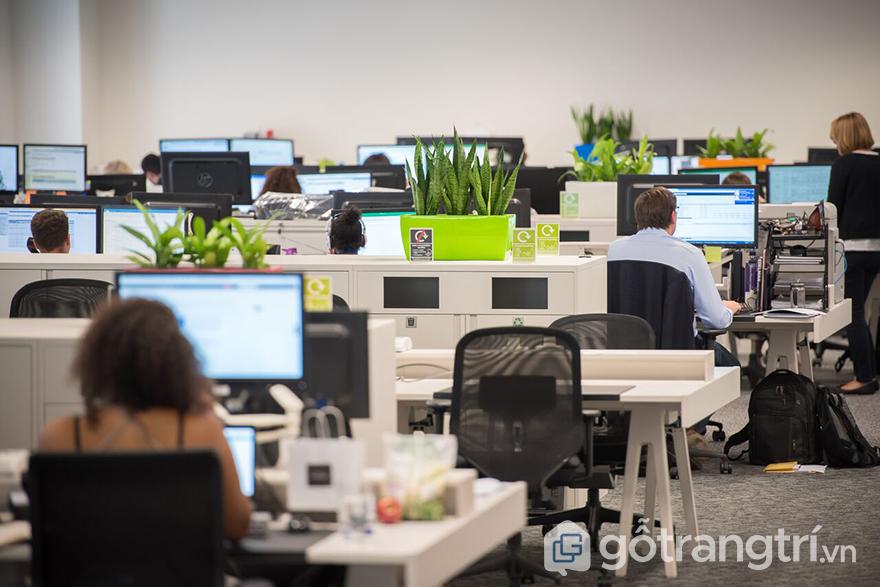 Trang trí văn phòng làm việc nhỏ với cây xanh