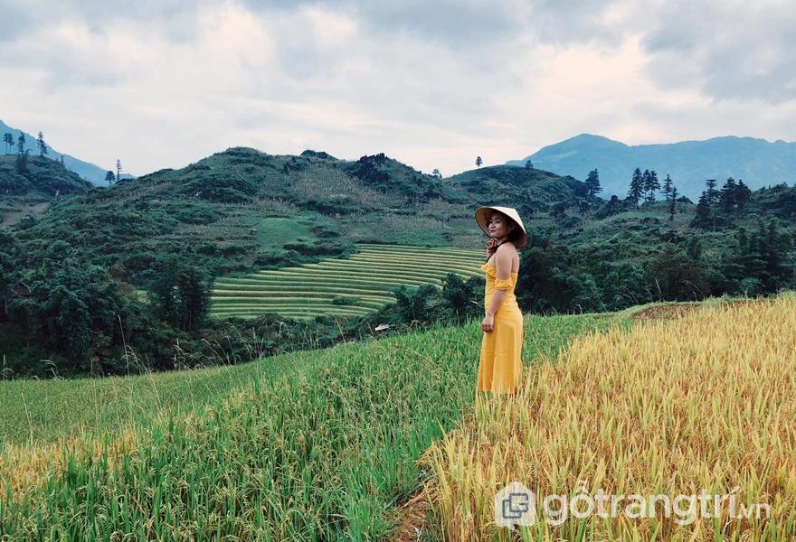 Cảm nhận hương lúa tại bản - ảnh internet