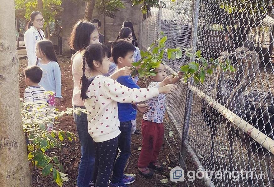 Các loại động vật tại Homestay Mely Farm - ảnh internet