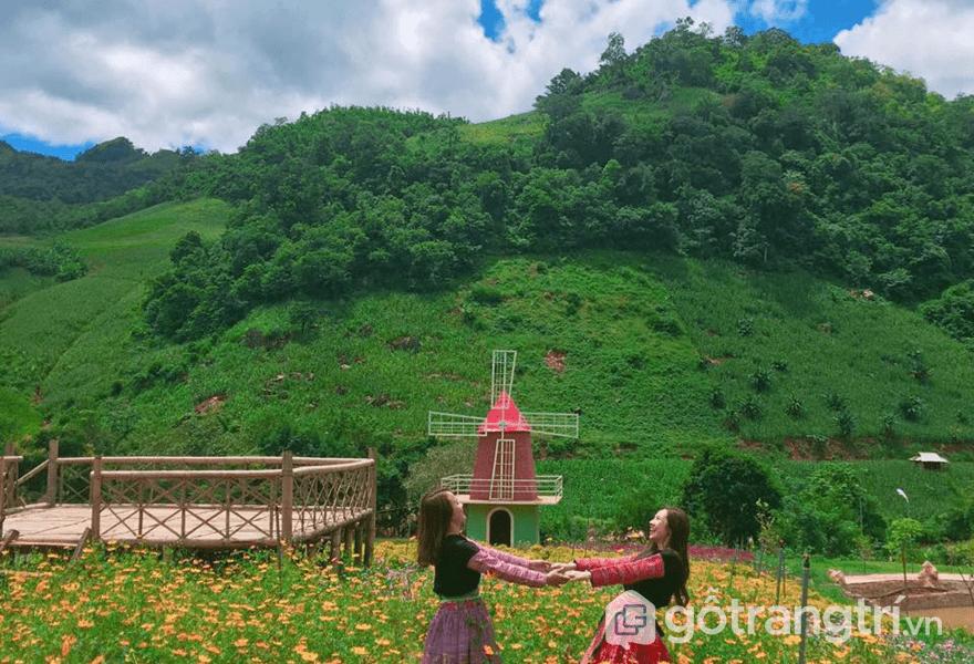 Mộc Châu Happy Land homestay - vùng đất của trăm hoa (ảnh internet)
