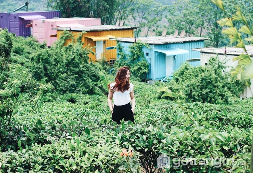 Không gian thoáng mát bởi màu xanh của đồi chè (ảnh internet)