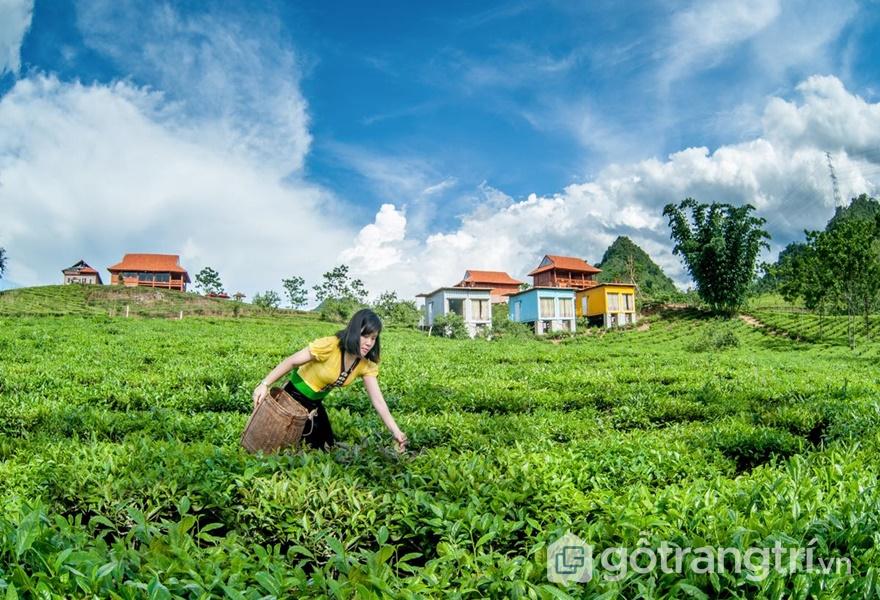 Không gian đồi xanh ngút ngàn tại Mộc Châu Arena Village (ảnh internet)