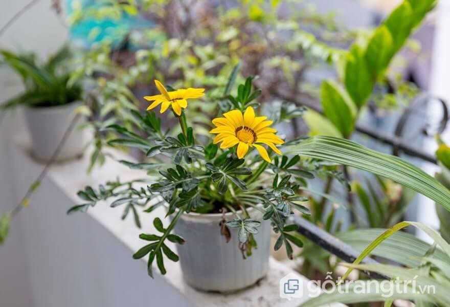 Các loại hoa đa dạng tại homestay Đà Nẵng giá rẻ - ảnh internet