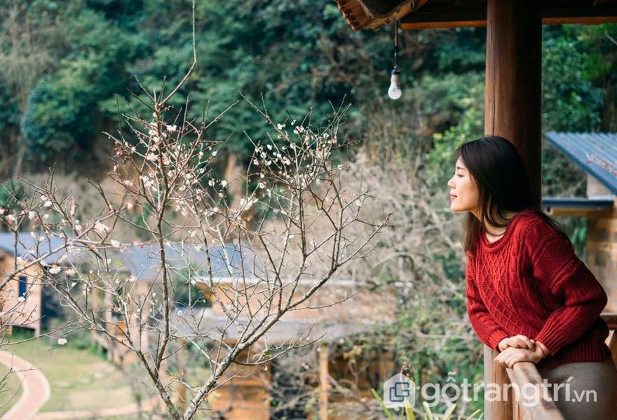 Mê mẩn với các homestay đẹp ở Mộc Châu nhìn là muốn đến liền (ảnh internet)