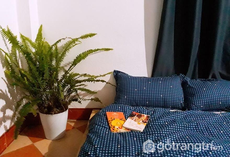 Phòng ngủ tại Bách Xanh House - ảnh interne