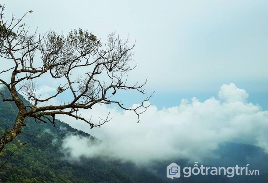 View từ Tam Đảo Hill Homestay - ảnh internet